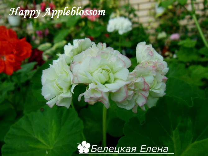 Happy Appleblossom